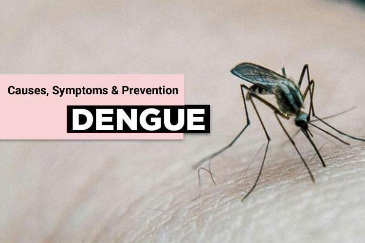 Dengue Fever Causes, Symptoms, and Prevention